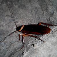 餐厅科学、专业化灭蟑螂服务