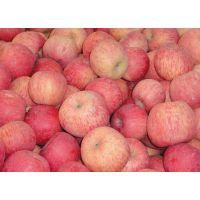 山东红富士苹果产地在哪里