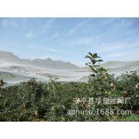 【现货供应】果树防雹网、塑料防雹网、葡萄防雹网、蔬菜防雹网