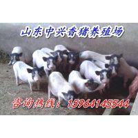 http://himg.china.cn/1/4_907_236444_600_400.jpg