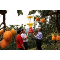 山东农业部使用绿色杀虫灯有效防治虫害