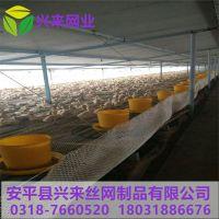 深圳塑料网 塑料网网带厂家 pvc养殖网厂家