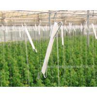 荷兰种植技术西红柿卡扣果穗钩 落蔓夹 葡萄吊秧器 黄瓜落蔓量大从优