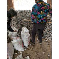 博淼供应 水过滤 园林路面用鹅卵石 型号齐全质量保证
