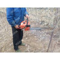 挖树机操作视频 合资动力起苗机 移栽机
