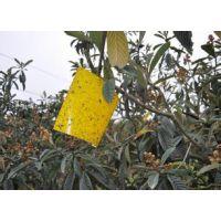 农业粘虫板24*20,厂家直销,价格优惠,优质粘虫板