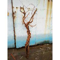 去皮漂白元宝树 石榴木厂家直销 艺术树干配件