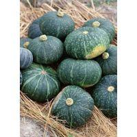 供应河北时丰农业科技开发有限公司蔬菜种子南瓜F6