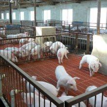 种羊用漏粪板 纯原料羊用漏粪板 羊粪板