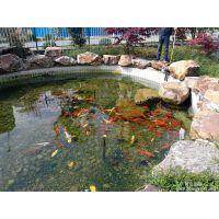 永乐市 游泳池水处理设备 砂缸过滤器 碧源by-06景观河湖水处理设备