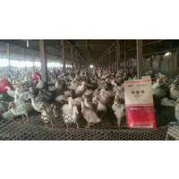 肉鸭吃什么长肉 减少过料 长的快 谊鑫白金肽