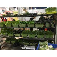 杭州盆栽蔬菜 杭州蔬菜 杭州有机蔬菜 盆栽蔬菜