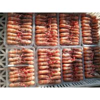 深海龙虾价格 威海海龙虾多少钱