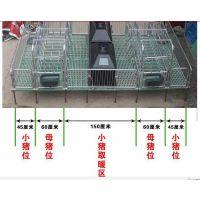 河北省保育床 母猪产床 定位栏 欢迎来电咨询