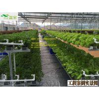 秋茬大棚蔬菜苗期管理技术要点,芳诚温室专业大棚施工