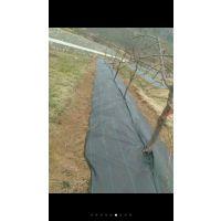 厂家现货热销0.5-4米园艺地布抗氧化果园用防草布蔬菜种植除草地布透气防腐根