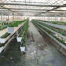 安平观光农业-温室种植-室内现实版开心农场-华耀农业带您体验