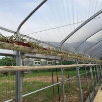 江西专用温室大棚管 蔬菜大棚管 热浸锌大棚钢管 连体避雨防虫棚
