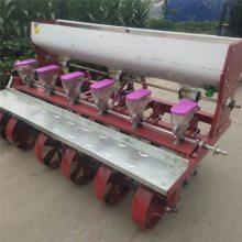 一次一粒排种的谷子精播机 六行桔梗播种机 汽油自走式菠菜播种机厂家