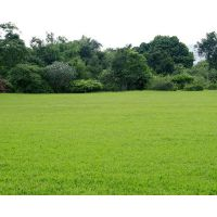 北京草皮卷,常年供应草皮卷 草坪卷 庭院绿化,铺草