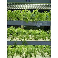 植物工厂家校酒店学校咖啡厅家庭型蔬菜种植机植物净化器现代智能