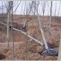 起树移苗挖树机 苗圃断根起树苗机 佳鑫玫瑰园移苗机厂家