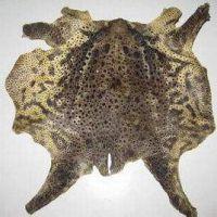 蟾蜍皮的吃法,蟾皮 ,蟾衣的吃法有哪些.通州蟾业