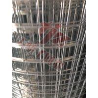 安平县天骄子销售电焊网大棚网床养鸭场