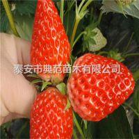 土德拉草莓苗价格 土德拉草莓苗品种介绍