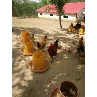 綦江土鸡苗批发市场;綦江附近哪里有鸡苗;求购本地土鸡苗