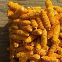 厂家直销粮仓网,圈玉米网,不锈钢钢板网,冲孔隔离网