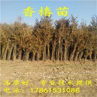 http://himg.china.cn/1/4_962_234830_800_800.jpg
