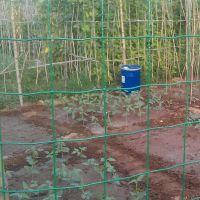 供应养殖铁丝网 绿色养殖专用铁丝网厂家