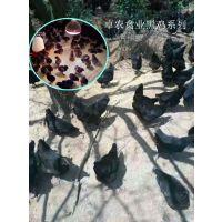 重庆附近哪里有脱温苗卖;重庆鸡苗哪家好;重庆本地土鸡苗,求购重庆黑鸡苗