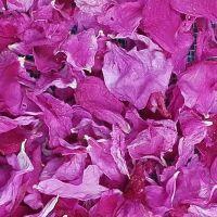 平阴食用 重瓣红玫瑰花瓣 干花瓣 做阿胶糕 用泡澡 做酱 冲茶糕点