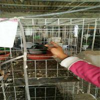 加粗加密三层12位四层16位鸽子笼肉鸽笼 鸟笼厂家河北利港丝网