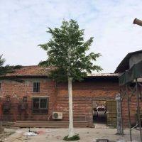 仿真白桦树干枝大树树杆 白桦树装落地摆放装饰树植物 假白桦树