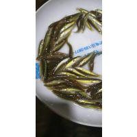 黑鱼苗/杂交生鱼苗/广州龙源水产黑鱼养殖场免费提供技术