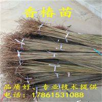http://himg.china.cn/1/4_975_234174_800_800.jpg