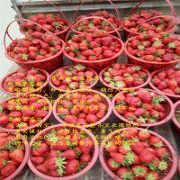 法兰地草莓苗 发货