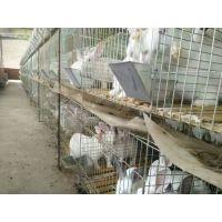安平滨澳现货批发零售优质镀锌兔子笼 养殖兔子笼子生产厂家 质优价廉的兔笼安平滨澳