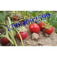 农业生产草莓大棚名迷宫式滴灌带 滴灌软主管多少钱一米