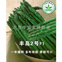 中农天腾丰岛二号f1-高产芦笋种子,
