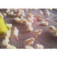 塑料平网雏鸡批发雏鸡雏鸭养殖塑料网 聚乙烯养殖网