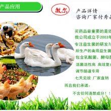 禽用益生菌健美禽厂家直销