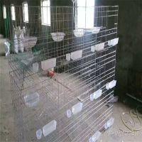 加粗大号12位16位鸽子笼 肉鸽笼冷镀锌热镀锌找河北利港丝网