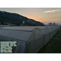 福州蔬菜温室大棚、温室大棚、福州龙泰温室大棚