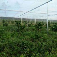 志广丝网制品厂生产各种防虫网结实耐用40-60目适用范围广泛
