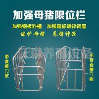 加工定制母猪定位栏 限位栏 沃森直销养猪设备