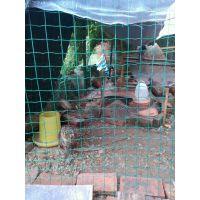 黄冈养鸡绿色铁丝网护栏一卷价钱 2米高围网仅3元/平米【先到先得】